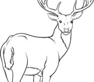 Animal deer coloring pages