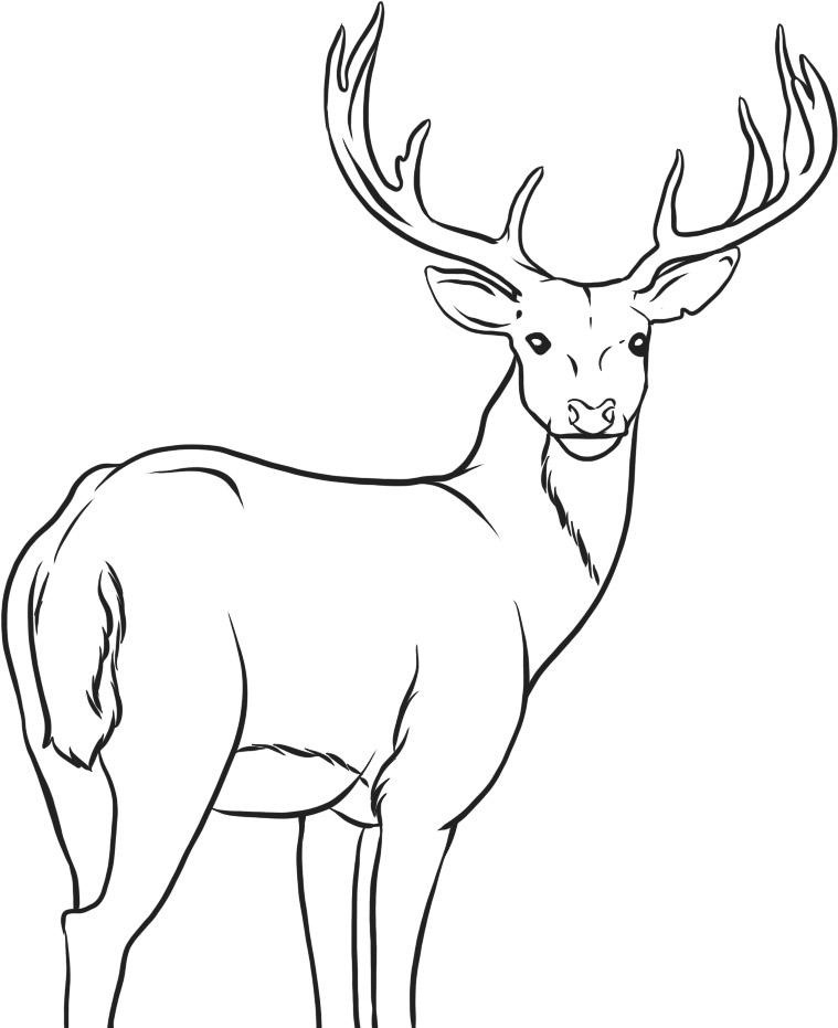Printable Animal deer coloring pages