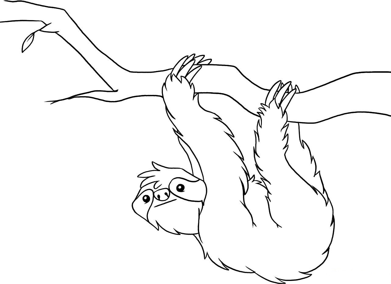 Sloth Coloring Page Printable Sloth Coloring Pages  Kids Coloring Pages