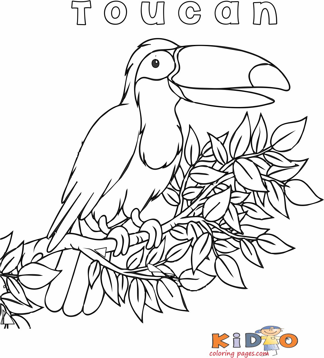 Toucan bird coloring page preschoolers
