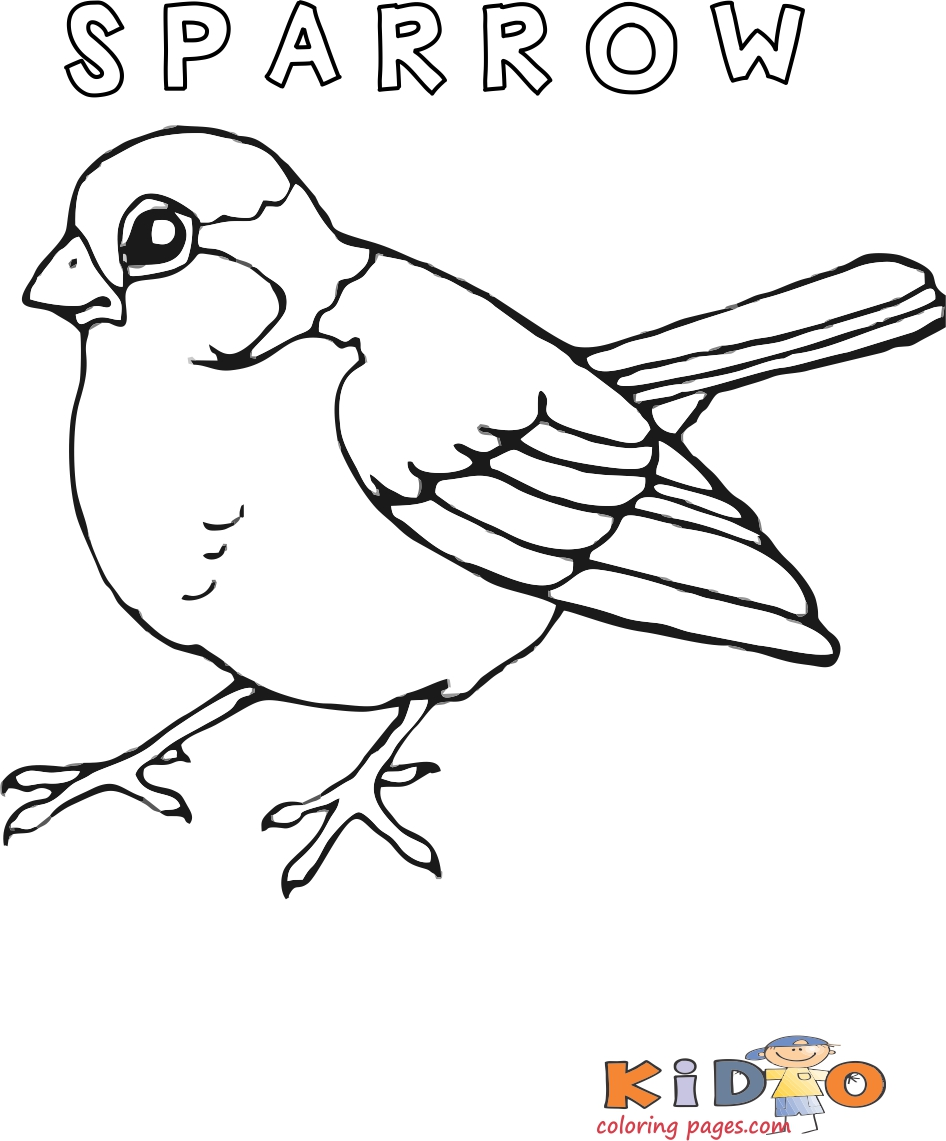 Sparrow bird pages to color print out