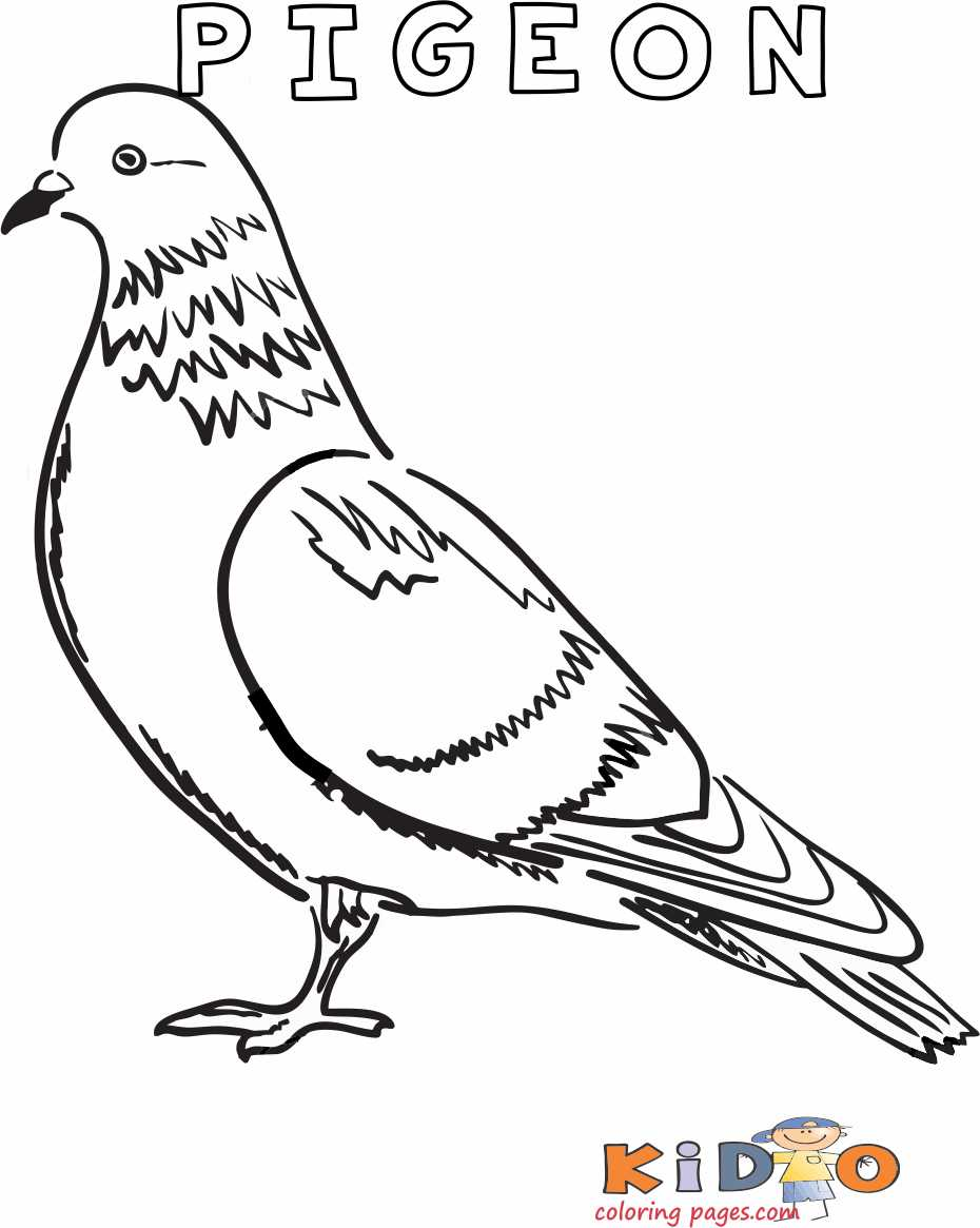 Pigeon colouring in page printable